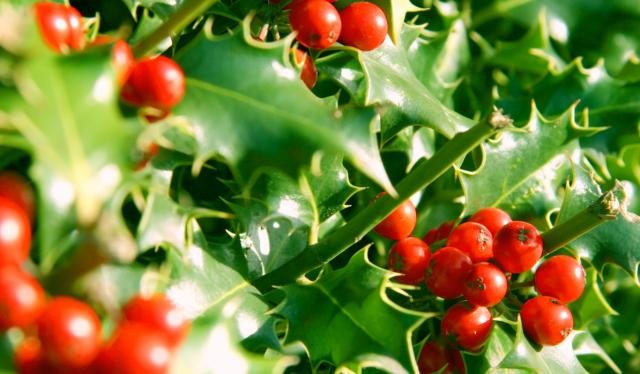 Holly - web op