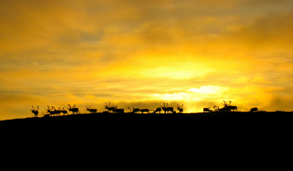 Welcome to Lapland featured